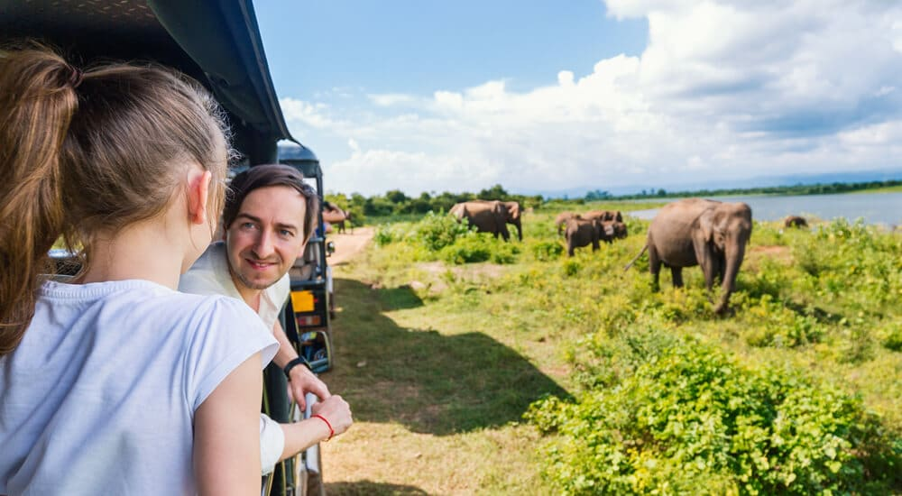 Sustainable safaris