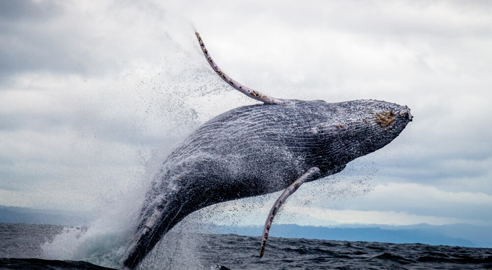 Positive impacts of Whale Heritage Sites