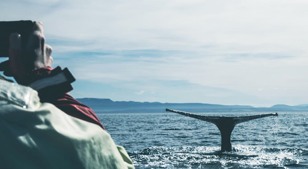 A responsible future for whales in tourism