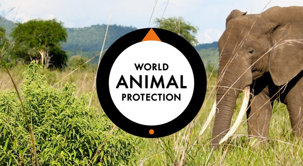 """About <a href=""""https://goodtourisminstitute.com/library/author/world-animal-protection/"""" target=""""_self"""">World Animal Protection</a>"""